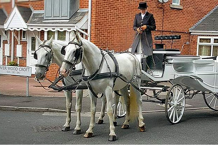 Carriage Horses 10