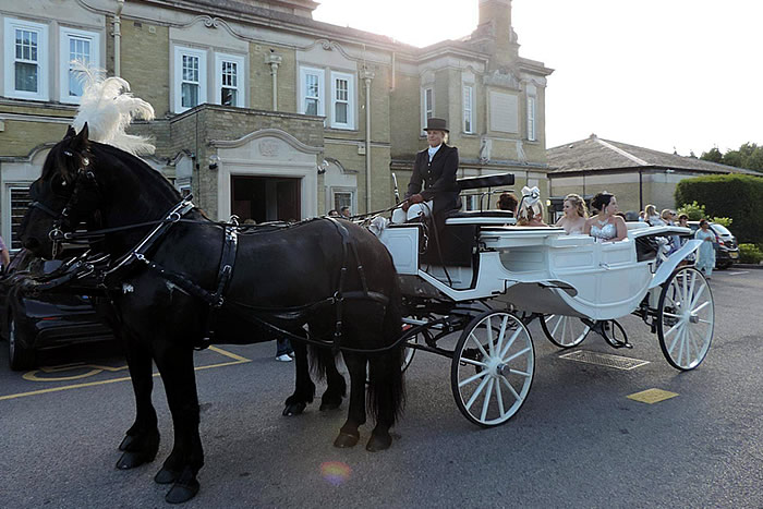 Prom Carriage Horses 6