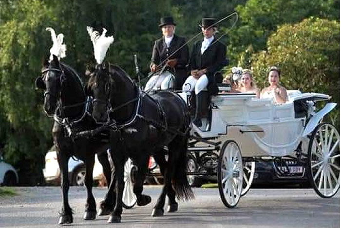 Prom Carriage Horses 8