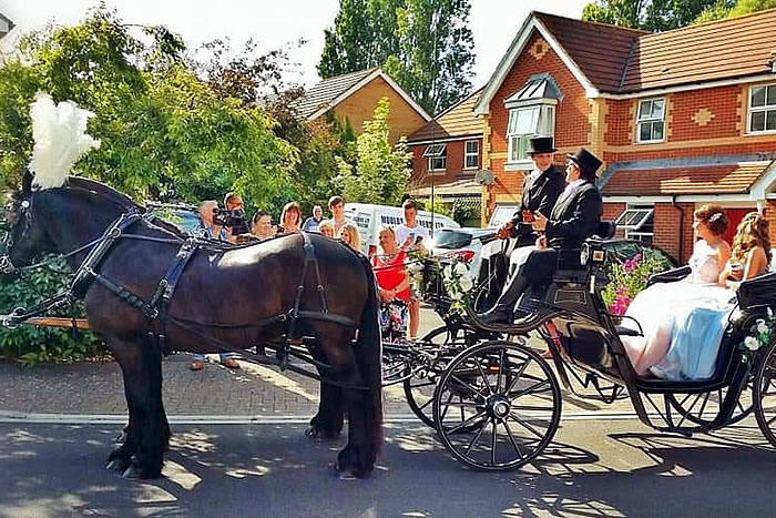 Prom Carriage Horses 9