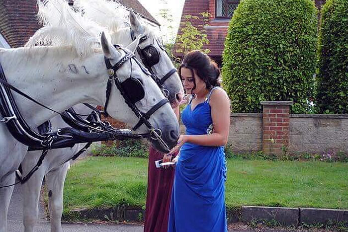 Prom Carriage Horses 1