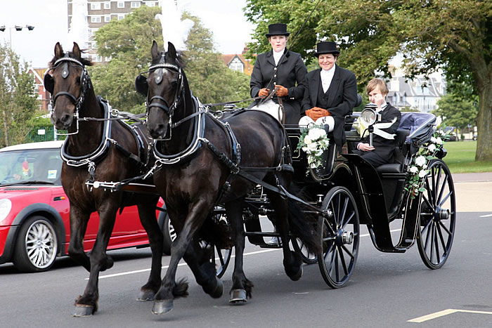 Prom Carriage Horses 5